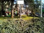 lavori operai piazza del popolo como e angolo via partigiani, albero
