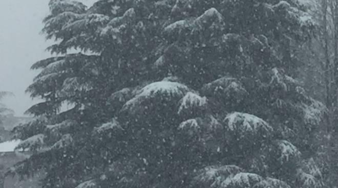neve a como, riprende la nevicata albero fiocchi bianchi