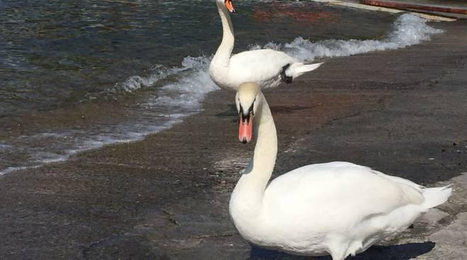 como bel tempo 24 aprile tanti turisti e primi bagni nel lago