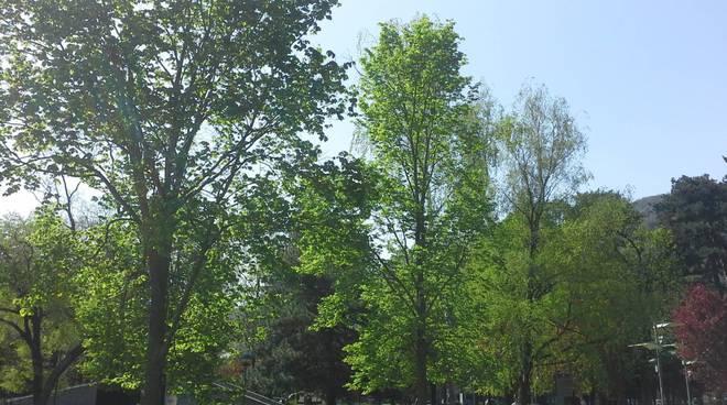 como e bel tempo sul lago cielo sereno turisti e alberi in fiore