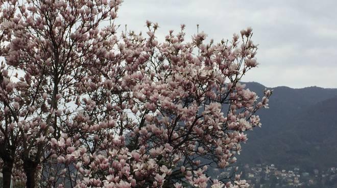 primavera a metà nel comasco: alberi in fiore e tante nuvole