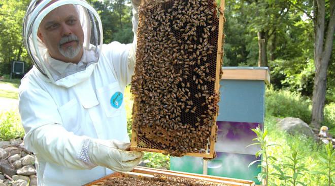 apicultura lariana