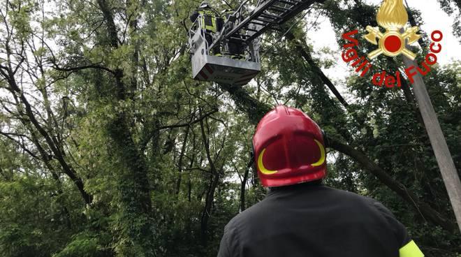 intervento dei pompieri di como via baraggia alberi su cavi dell'enel