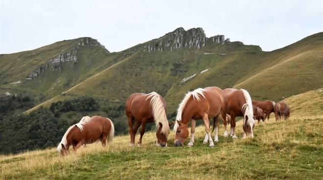 la transumanza dei cavalli del bisbino