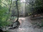 aggressione ad una ragazza nel bosco della valbasca generiche bosco zona