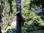 incidente via torno como feriti durante potatura albero