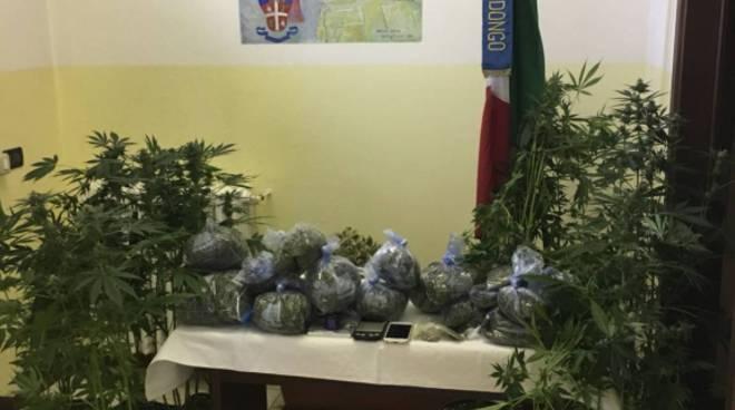 piantagione di canapa a casa di un ragazzo di dongo, arresto dei carabinieri