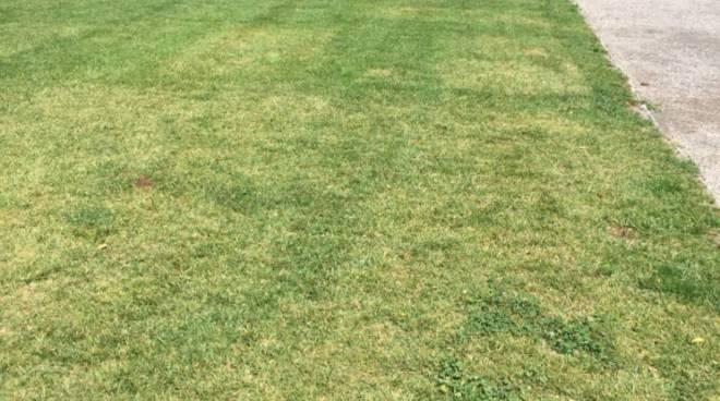 migliora l'erba di villa olmo dopo qualche settimana dall'evento dolce e gabbana