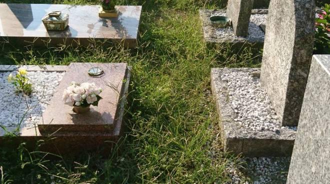 cimiteri di Como erbacce e degrado albate e camnago volta