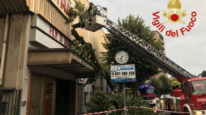 Albero cade sulla facciata del cinema Astra di Como, viale Giulio Cesare