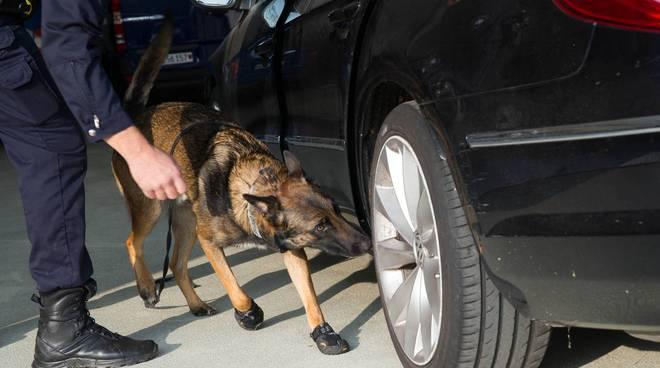 cani antidroga al confine italo-svizzero guardie di confine