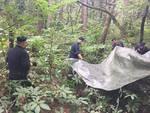 carabinieri rimuovono tende spacciatori parco pineta oltrona san mamette