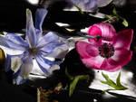 fiori e visioni mostra villa carlotta