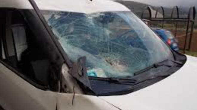 cervo contro auto fenegrò, parabrezza distrutto auto