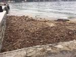 detriti nel lago di como dopo il maltempo
