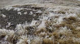 Neve e freddo nei campi del comasco questa mattina al riseveglio