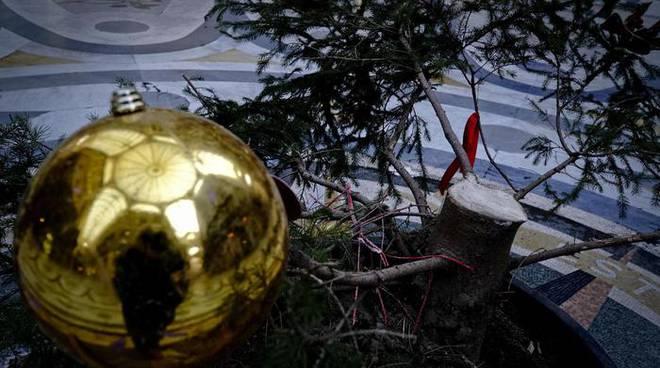 albero di natale rubato generica
