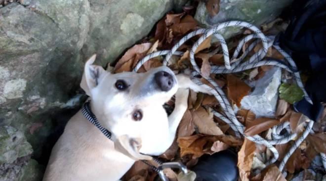 pompieri salvano il cane albus finito nel burrone a como