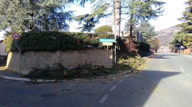vento forte stamane, a sagnino spezzato grosso albero in via segantini