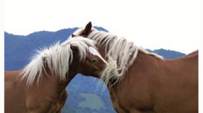 cavalli bisbino