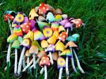 coltivazione funghi allucinogeni generica