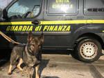 droga su bus flixibus sequestrata da finanza e scoperta da cane