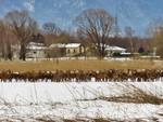 readuno dei cervi al pian di spagna
