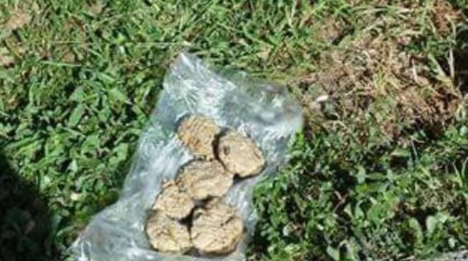 bocconi avvelenati per cani strade di carate urio generici polpette avvelenate