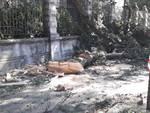 Como, i danni del vento il giorno dopo: la presa diretta