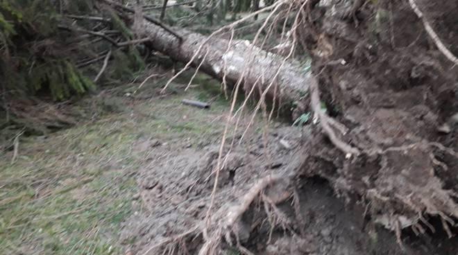 danni per il vento nel comasco, albero sradicato pali abbattuti