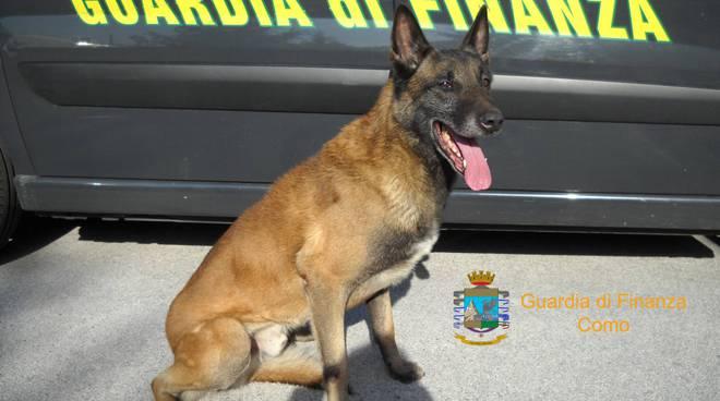 finanzieri scoprono droga su auto commerciante a brogeda con cane