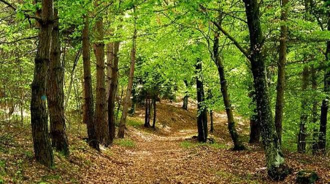 Vivaio Forestale Curno : Il bosco: una risorsa in crescita da tutelare e valorizzare ciao como