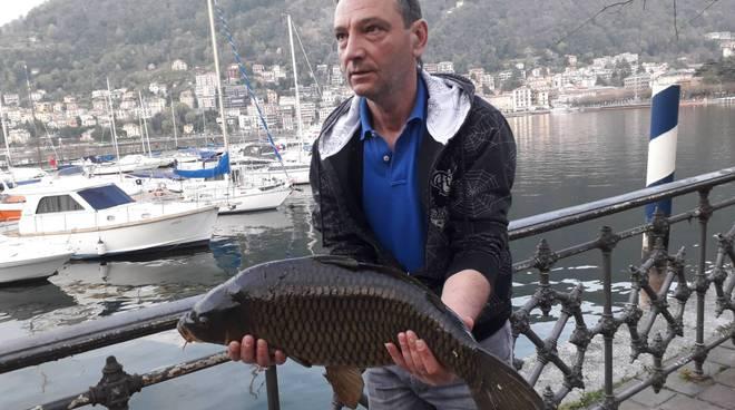 pescatori catturano una super-carpa di 7 chili nel primo bacino del lago