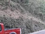 albero caduto su auto via per san fermo operai sistemare zona