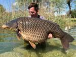 carpa gigante nel lago di pusiano pescata da uno straniero 31 chili di peso