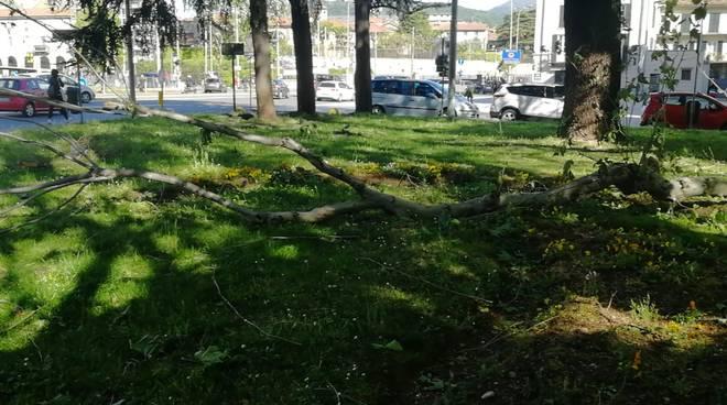 immagini alberi abbattuti dal vento a como, rami spezzati
