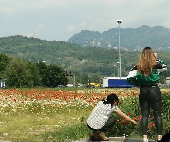 lazzago i turisti si fermano a cogliere i papaveri nel campo in fiore