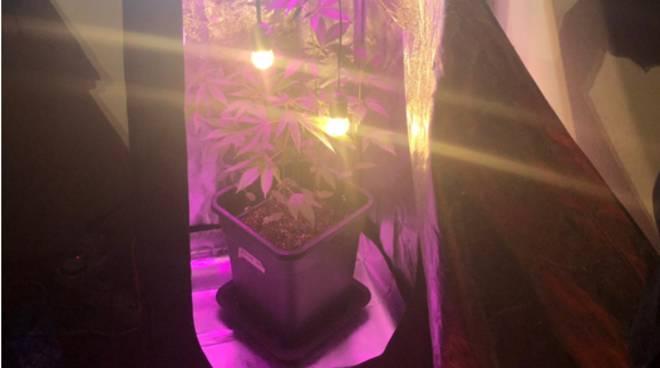 serra in casa per coltivazione droga scoperta dai carabinieri di Cantù