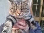 gatino bambù senza una zampa sua padrone vuole raccolta fondi per una protesi