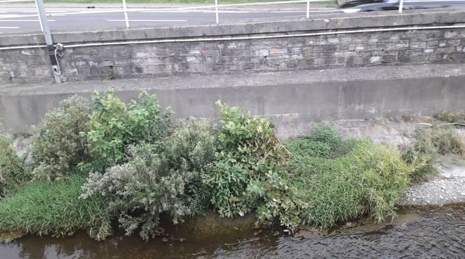 erbacce alte e degrado nbel letto del fiume cosia a como zona san martino