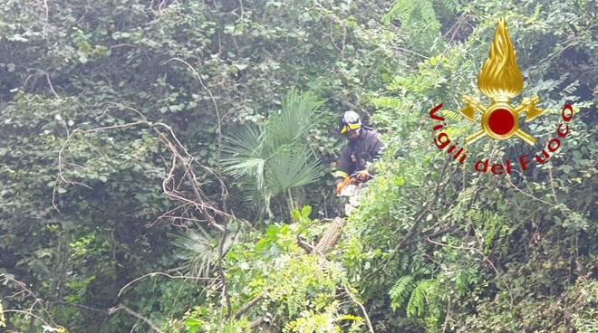 cremia albero cade sulla regina rimosso dai pompieri strada chiusa