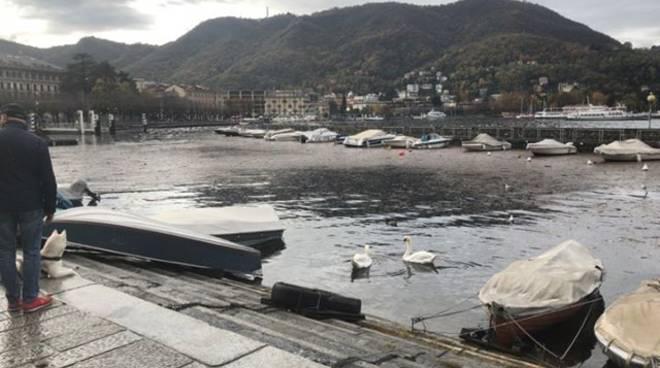 detriti nel lago di como zona sant'agostino distesa su acqua