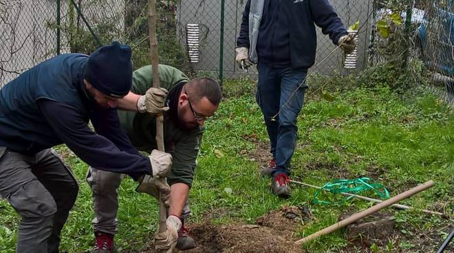Per Como Pulita pianta tre alberi ai giardini di via Crispi: bravi