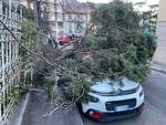 Il vento forte su Como: raffiche da paura, danni ed alberi caduti