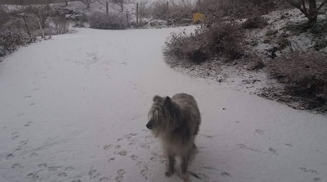 foto neve oggi a san fedele e lanzo intelvi