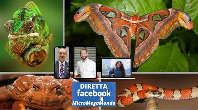 Coronavirus La Rete E Live Episode 37 Ciaocomo