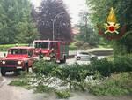 interventi pompieri piante pericolanti su a9 e cantù