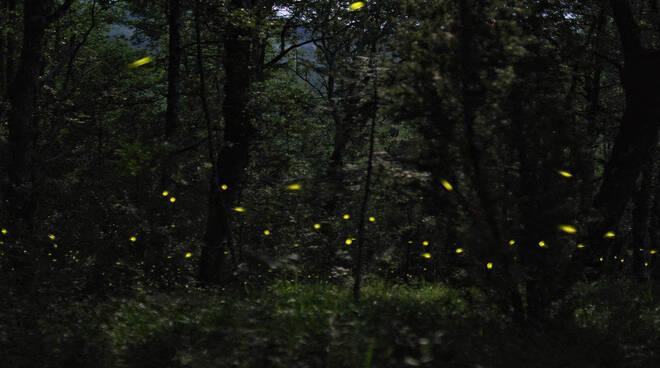 lucciole parco lura