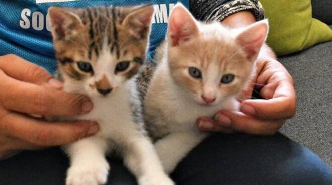 gatti abbandonati casa di carimate recuperati lega difesa animali