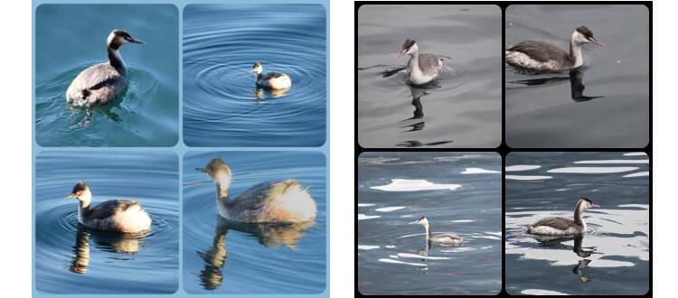 5 cose laghi minori papere
